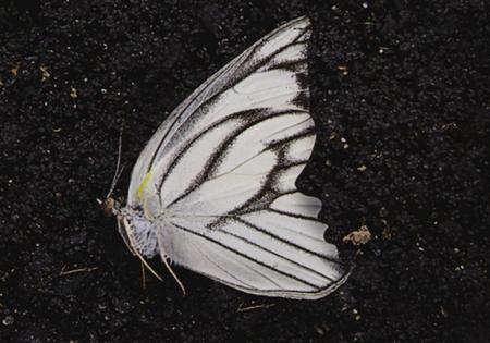 Il giardino delle farfalle di Dot Hutchison | Recensione di Sandy